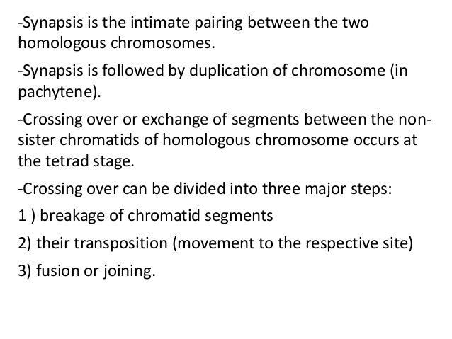 crossing over meiosis