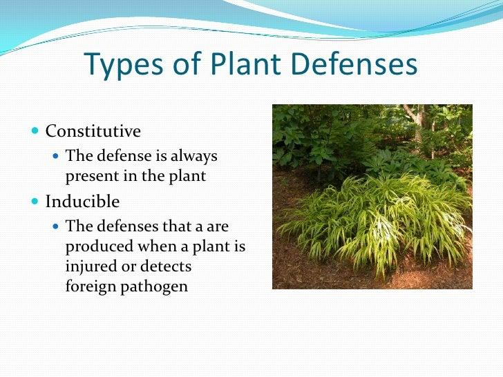 Plant Defenses