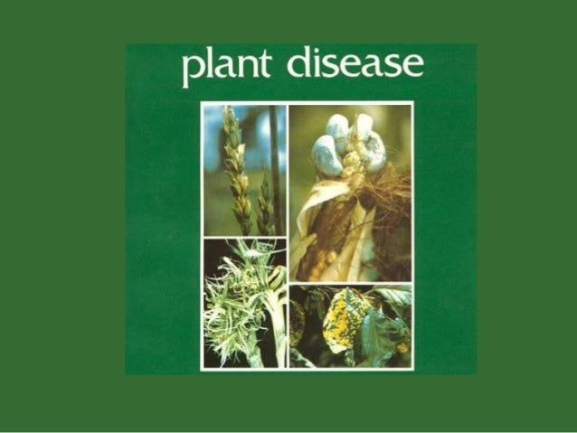  Some micro organisms cause diseases in plants.The study of disease condition is known as PathologyThe Organisms that c...