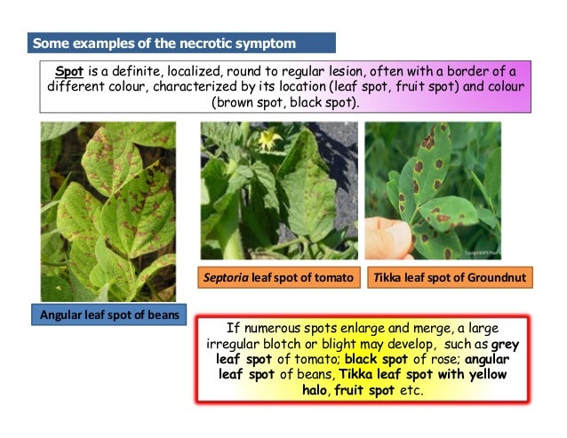 Causal Organisms for Plant diseases and its symptoms
