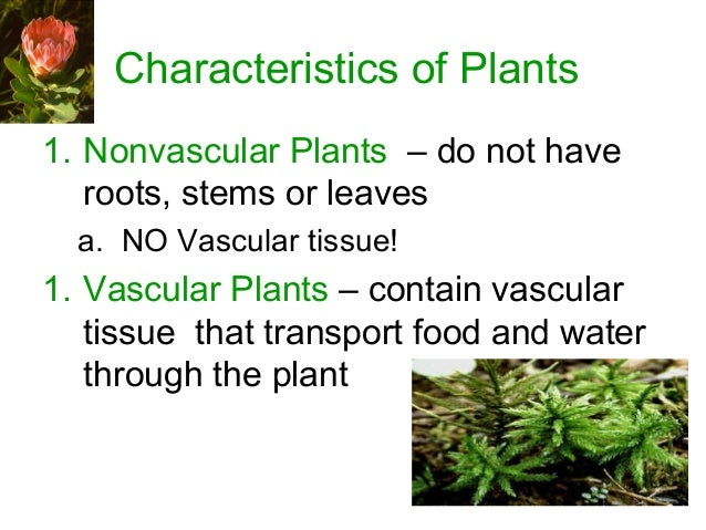 characteristics of plants That reduce the performance and productivity of herbivores and quality of their  agricultural products most structural anti-quali- ty characteristics of plants affect.
