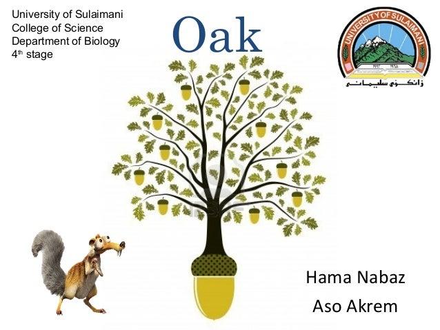 University of Sulaimani College of Science Department of Biology 4th stage  Oak  Hama Nabaz Aso Akrem