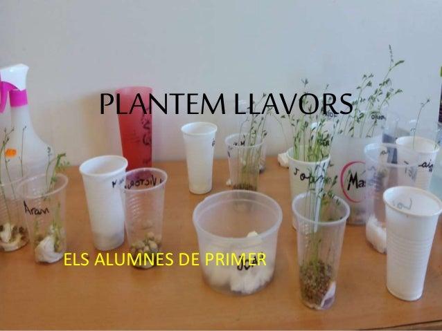 PLANTEM LLAVORS ELS ALUMNES DE PRIMER