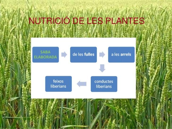 NUTRICIÓ DE LES PLANTES<br />