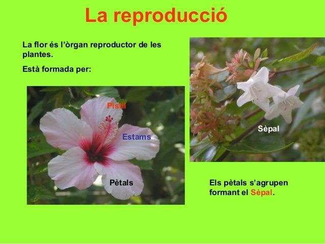 Tema10 les plantes for Les plantes