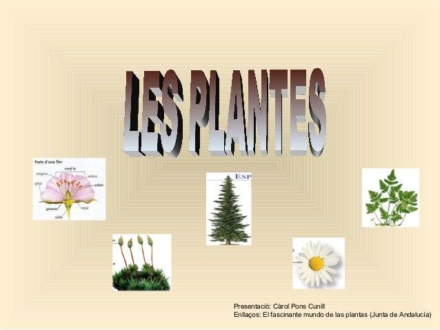 Presentació: Càrol Pons Cunill Enllaços: El fascinante mundo de las plantas (Junta de Andalucía)