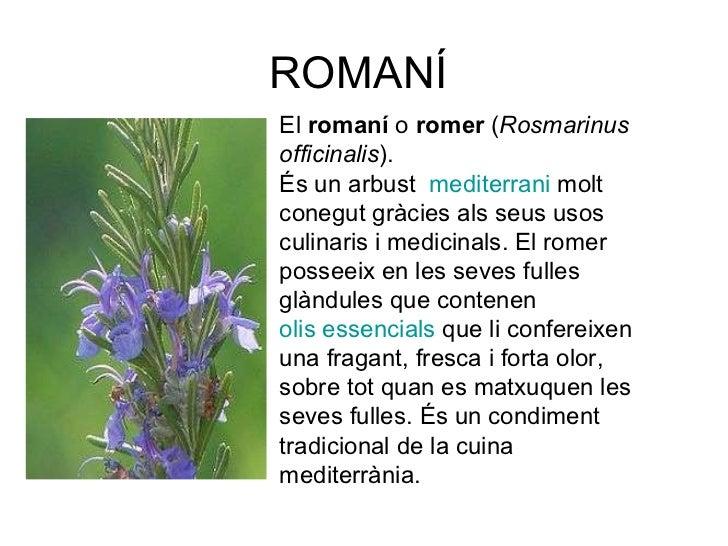 ROMANÍ El romaní o romer ( Rosmarinus officinalis ). És un arbust  mediterrani molt conegut gràcies als seus usos cu...