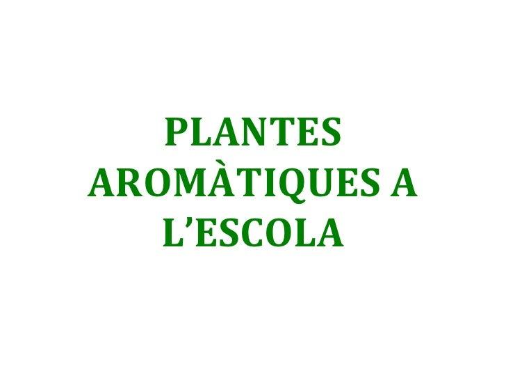 PLANTES AROMÀTIQUES A L'ESCOLA