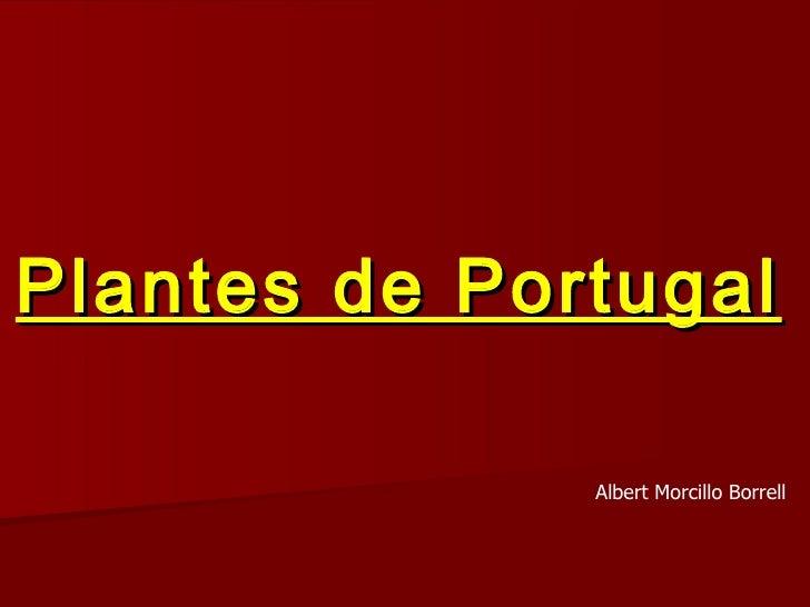 Plantes de Portugal Albert Morcillo Borrell