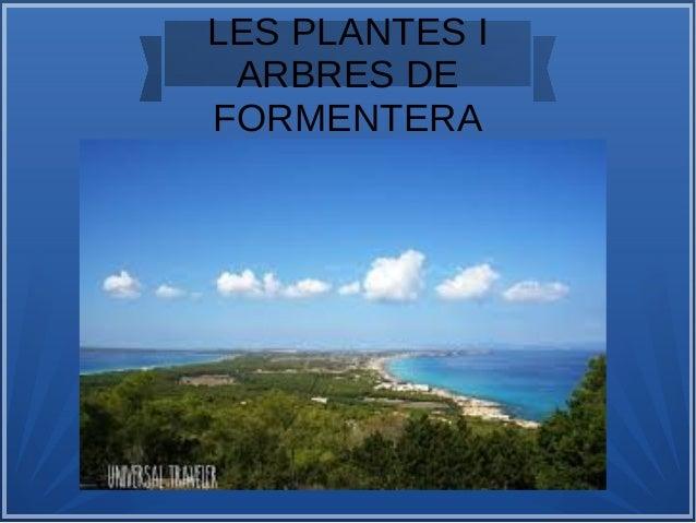 LES PLANTES I ARBRES DE FORMENTERA
