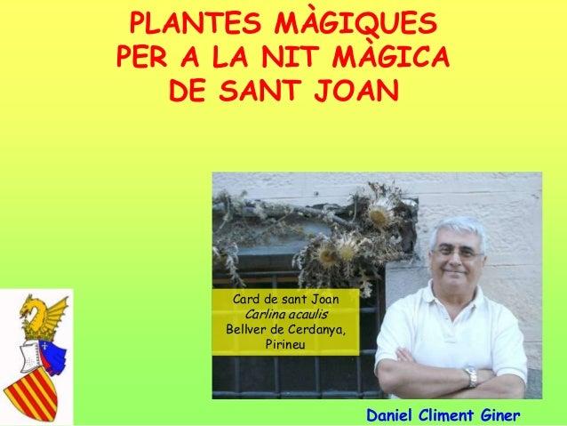 PLANTES MÀGIQUESPER A LA NIT MÀGICADE SANT JOANDaniel Climent GinerCard de sant JoanCarlina acaulisBellver de Cerdanya,Pir...