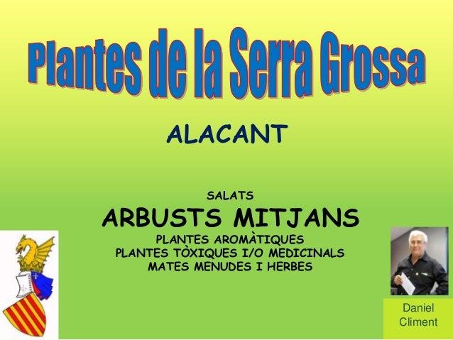 ALACANT            SALATSARBUSTS MITJANS     PLANTES AROMÀTIQUESPLANTES TÒXIQUES I/O MEDICINALS    MATES MENUDES I HERBES ...