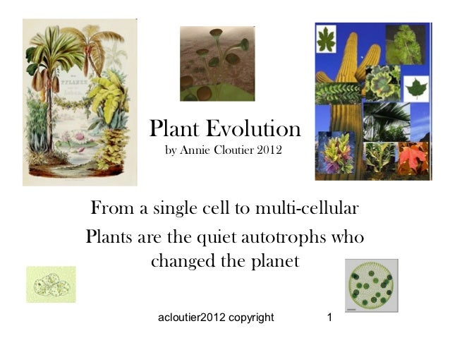 Plant Evolution          by Annie Cloutier 2012From a single cell to multi-cellularPlants are the quiet autotrophs who    ...