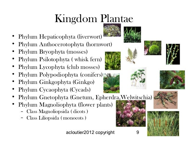 Kingdom Animalia Examples Related Keywords - Kingdom ...