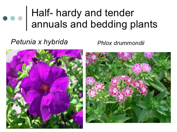 How are annuals and perennials different? | wonderopolis.