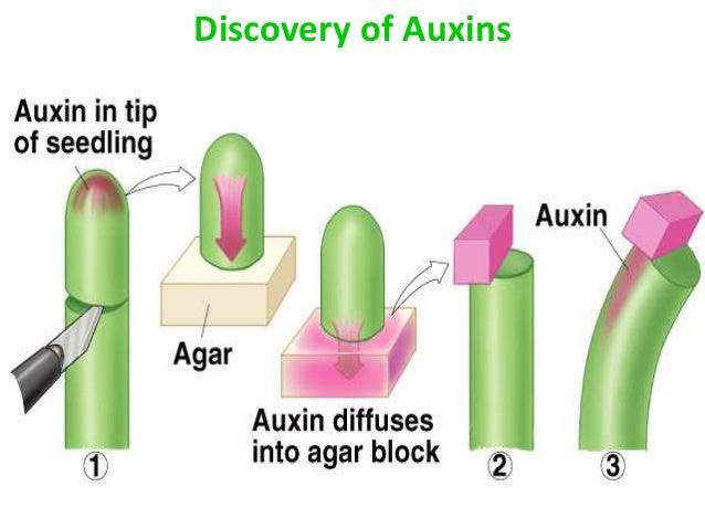 Does aspirin affect plant growth 5 essay