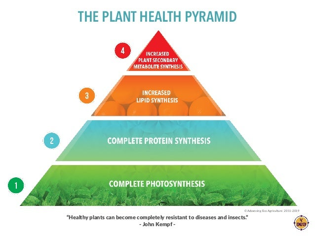 """""""Healthy plants can become completely resistant to diseases and insects."""" - John Kempf - THE PLANT HEALTH PYRAMID ©Advanci..."""