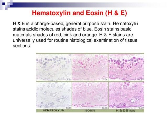 h&e staining procedure pdf