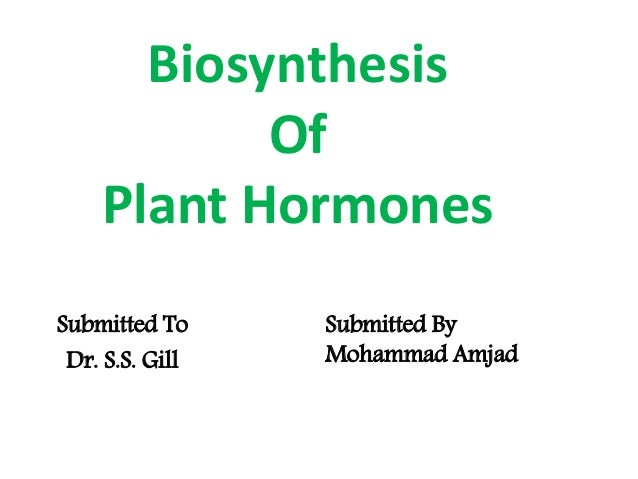 Biosynthesis Of Plant Hormones Submitted To Dr. S.S. Gill Submitted By Mohammad Amjad