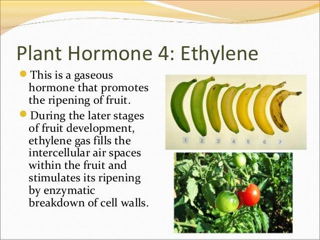 Plant hormones and plant reproduction.