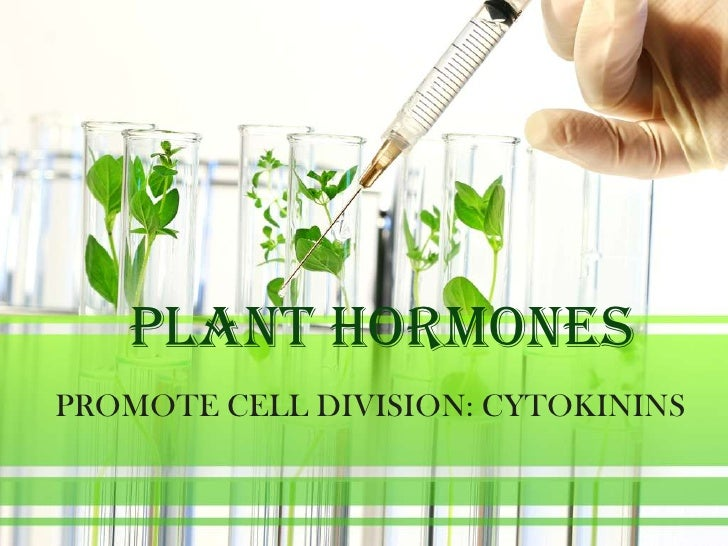 PLANT HORMONESPROMOTE CELL DIVISION: CYTOKININS