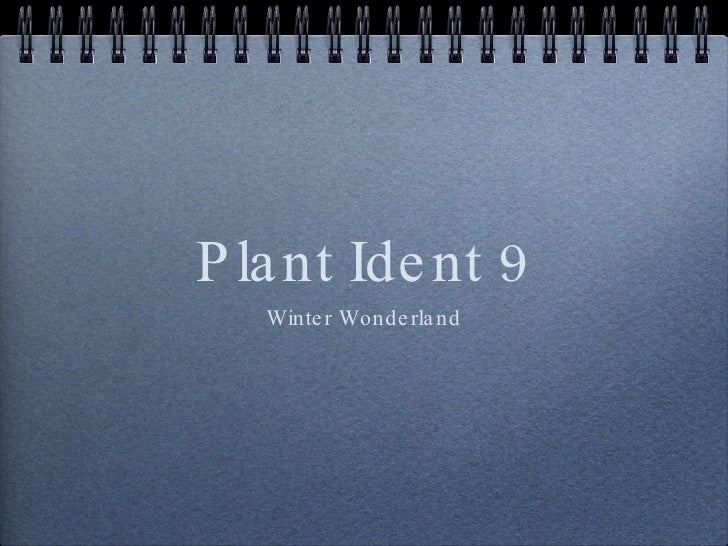 Plant Ident 9 <ul><li>Winter Wonderland </li></ul>