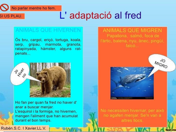 Situació actualAlguns animals estan en perill d extinció a Catalunya com: l ós bru , l arpella, el fartet, latortuga medit...