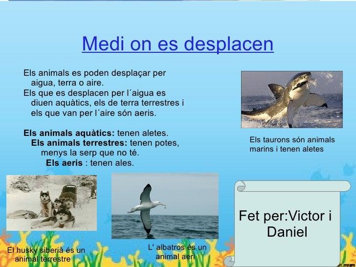 Vertebratsen la qual suneixen elsEls vertebrats: Tenen una columna vertebralEls cinc tipus de vertebrats són:ossos de lesq...