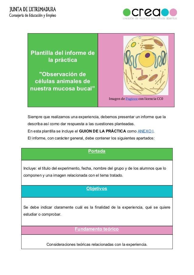 Plantilla Del Informe De La Practica Observacion De Celulas