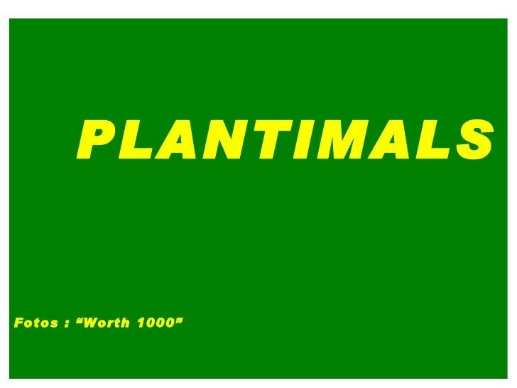 """PLANTIMALS Fotos : """"Worth 1000"""""""