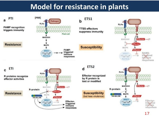 Arabidopsis and the Plant Immune System