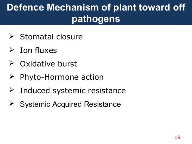plants immune systems This group has provided ample evidence that parallels between innate immune systems in plants or  documents similar to innate immune system in plants and.