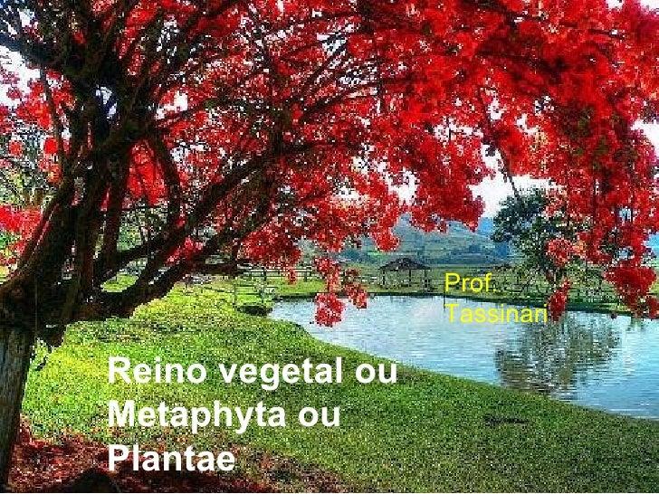 Reino vegetal ou Metaphyta ou Plantae  Prof. Tassinari