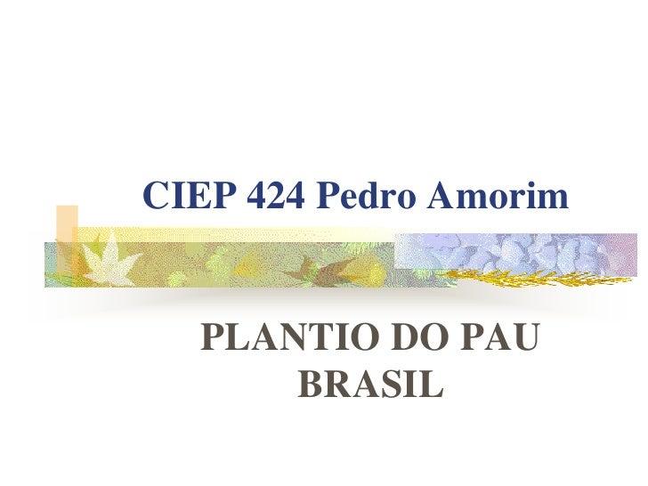 CIEP 424 Pedro Amorim  PLANTIO DO PAU      BRASIL