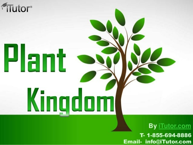 plant kingdom Find plant kingdom lesson plans and teaching resources from the plant kingdom worksheets to plant kingdom coloring videos, quickly.