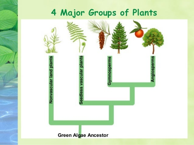 facts about the two major group of plants Brown-green algae refers mainly to one-celled plants called diatoms these form major component of the oceans about each group of plants as you two cotyledons.