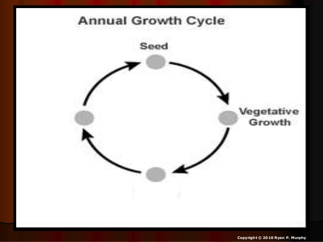 Plants Life Cycles Biology Lesson Powerpoint Annuals Biennials Per
