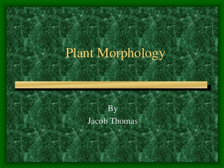 Plant Morphology<br />By <br />Jacob Thomas <br />
