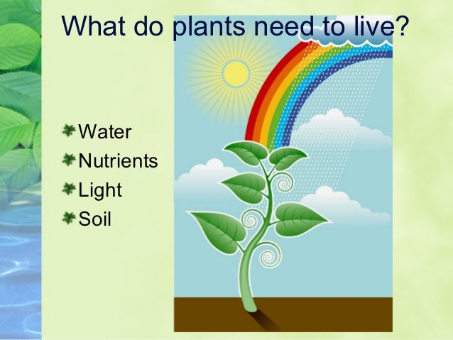 What Do Plants Need