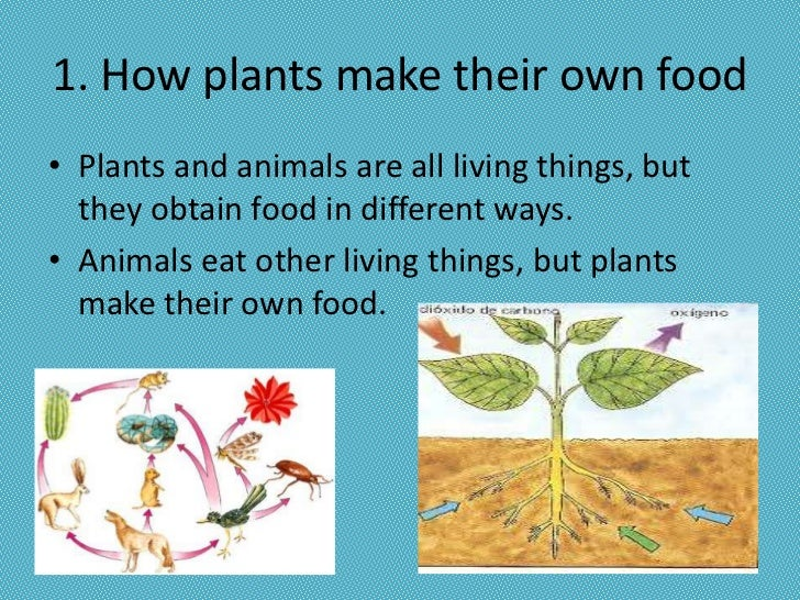 Who Are The Autotrophs Making The Food For
