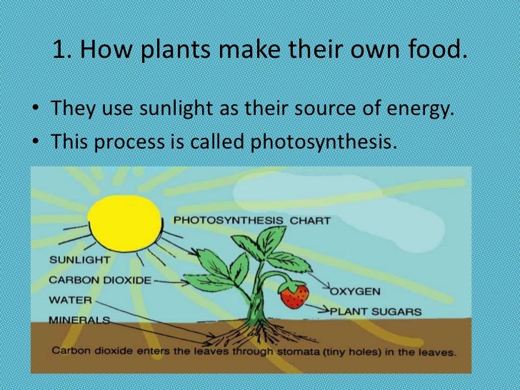 What Process Do Green Plants Use To Make Food