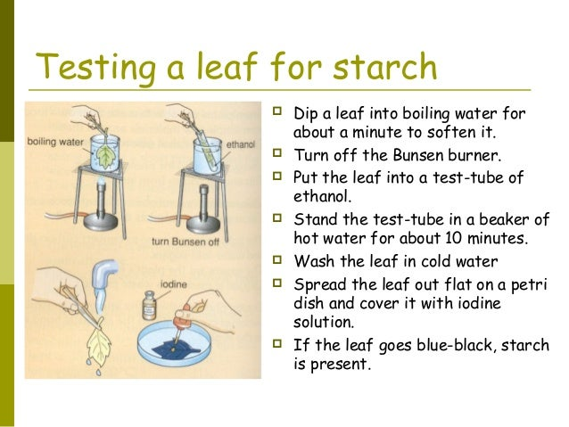 starch test for biology sba