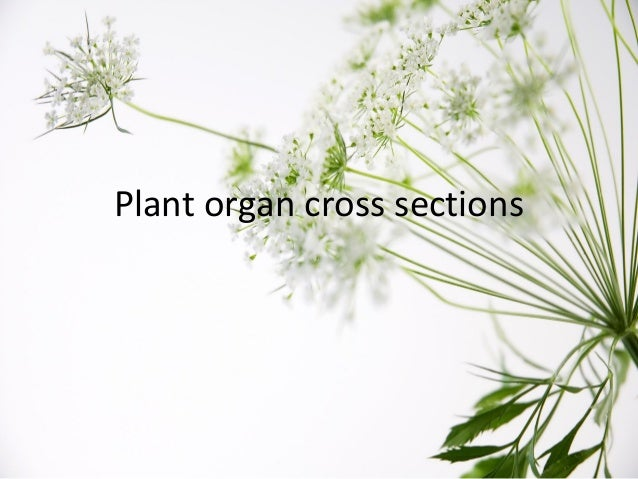 Plant organ cross sections