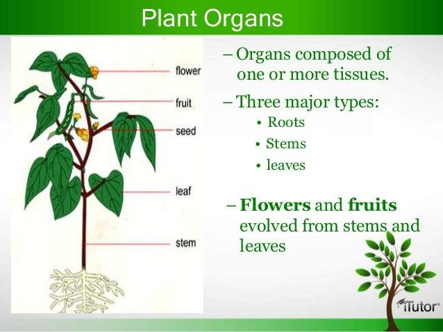 Plant organs 4 638gcb1365418192 plant organs 4 ccuart Gallery