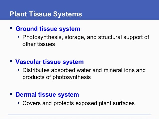 Plant Tissue Systems  Ground tissue system • Photosynthesis, storage, and structural support of other tissues  Vascular ...