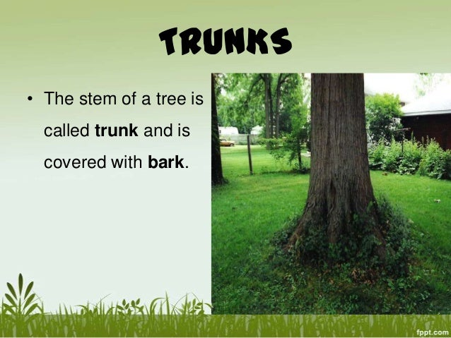 Plant parts - Flowers that grow on tree trunks ...