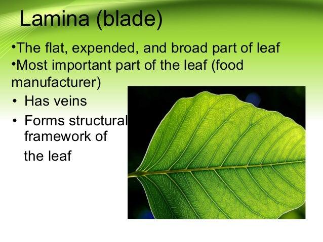 plant-parts-15-638.jpg