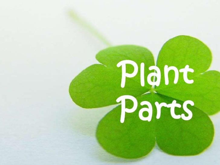 PlantParts