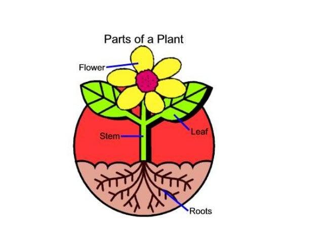 Plant parts1
