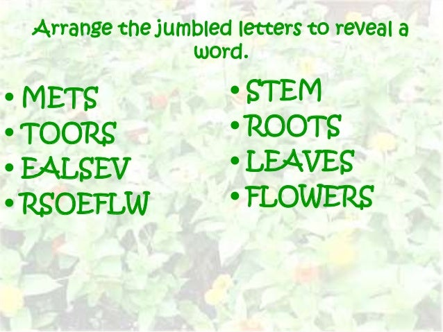 letter arranger into words plant parts 18465 | plant parts 4 638
